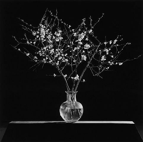 Robert-mapplethorpe-flower-image-6